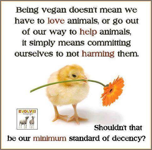 Being Vegan is NOT about Loving Animals | akhilasuri